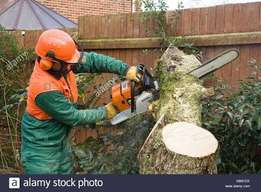 Site clearing.Tree felling and cleaning