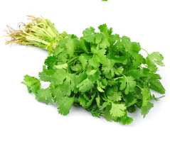Coriander leaves / Dhania