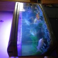 Fishtank, Kois and acc for sale