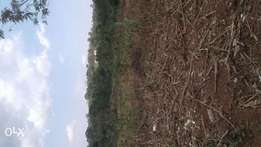 Land with title 25 acres