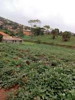 Hot plot on sale their 25decimals land tittle private mailo lubowa