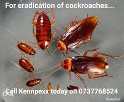 Pests Control Services | Cleaning Services