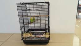 Breeding pair show budgie forsale including cage