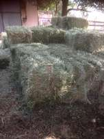 Lucern bales for sale