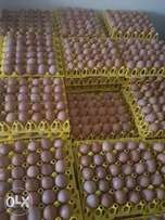 Fresh farm Eggs for sale in Nairobi and Narok