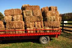 Bales of Hay and grass available from R30 per bale Pretoria West Pretoria West - image 1