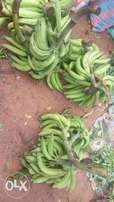Plantain for sale in ogun state