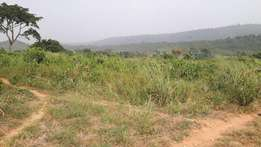 Promotion Land at Nsawam for sale
