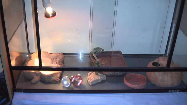 Lizard cage with accessories Bloemfontein - image 3