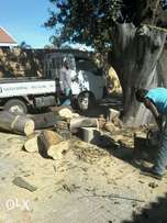 uprooting and tree felling