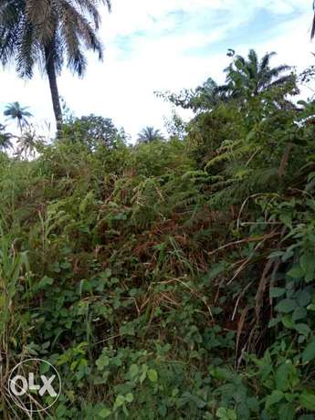 Lands for sell 100 by 100, 50 by 100, location is Akpabuyo LGA Calabar - image 2