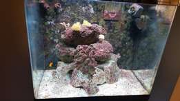 Red Sea Max 130D Marine Aquarium