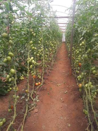 Tropicalized Greenhouse. Drip Irrigation. Button Irrigation. Nairobi CBD - image 8