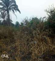 2 plots of land for sales