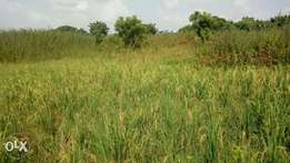 4000 plots of land for sale along Ilorin-Jebba Road close to Oko-olowo