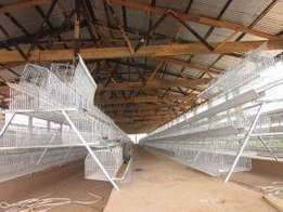 Layers cages for 1000 birds ready available on sale.