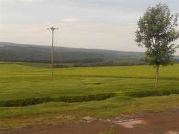 genuine 1000 acres of tea estate in kericho on sale