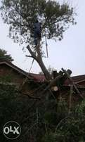 tree felling rubbish removals