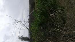 12 1/2 acres land for sale at lamu