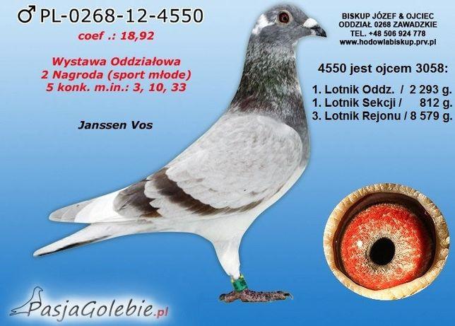 Gołębie Pocztowe Janssen Van Loon Aarden Koopman Drapa Strzelce