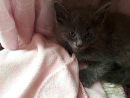 Kitten's looking for a loving home