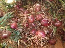 Red pinnoy onion for sale
