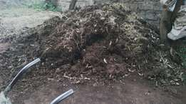 Cows manure for sale