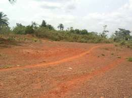 Land for sale at Amrahia town.