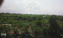 own a genuine two(2)plots of land in 8miles calabar