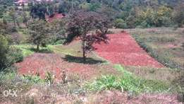 1.5 Acres Prime Land In Nyeri