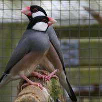 Imported finches for sale