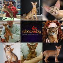 Pozostałe Rasy Kotów Na Sprzedaż Ogłoszenia Olxpl