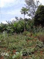 100 by 100 Plot for sale in karura