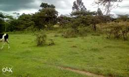 1 acre good piece of land