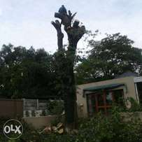 Alll tree felling and removals