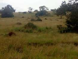 120acres of land in nkokonjeru zziba touching on Victoria each at 6m