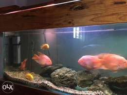 2meter fish tank with fish for sale