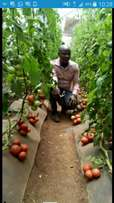 Agro-tech training classes+attachment+JOB placement