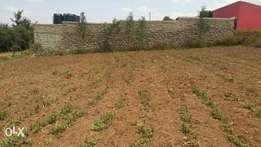 1/4 plot broader farm with titles ideal for rentals