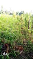1\4 acre land for sale in Karingaini Nyeri Chiaraini