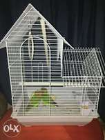 Love Birds looking for a loving home