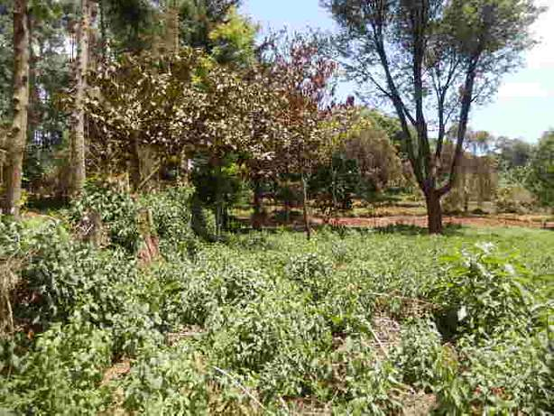 Tigoni 2 Acres Near Birthday Road Nairobi CBD - image 3
