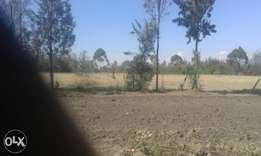Two 2acres in nanyuki mwireri