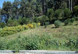 100 by 100 plot for sale at runda muhasibu