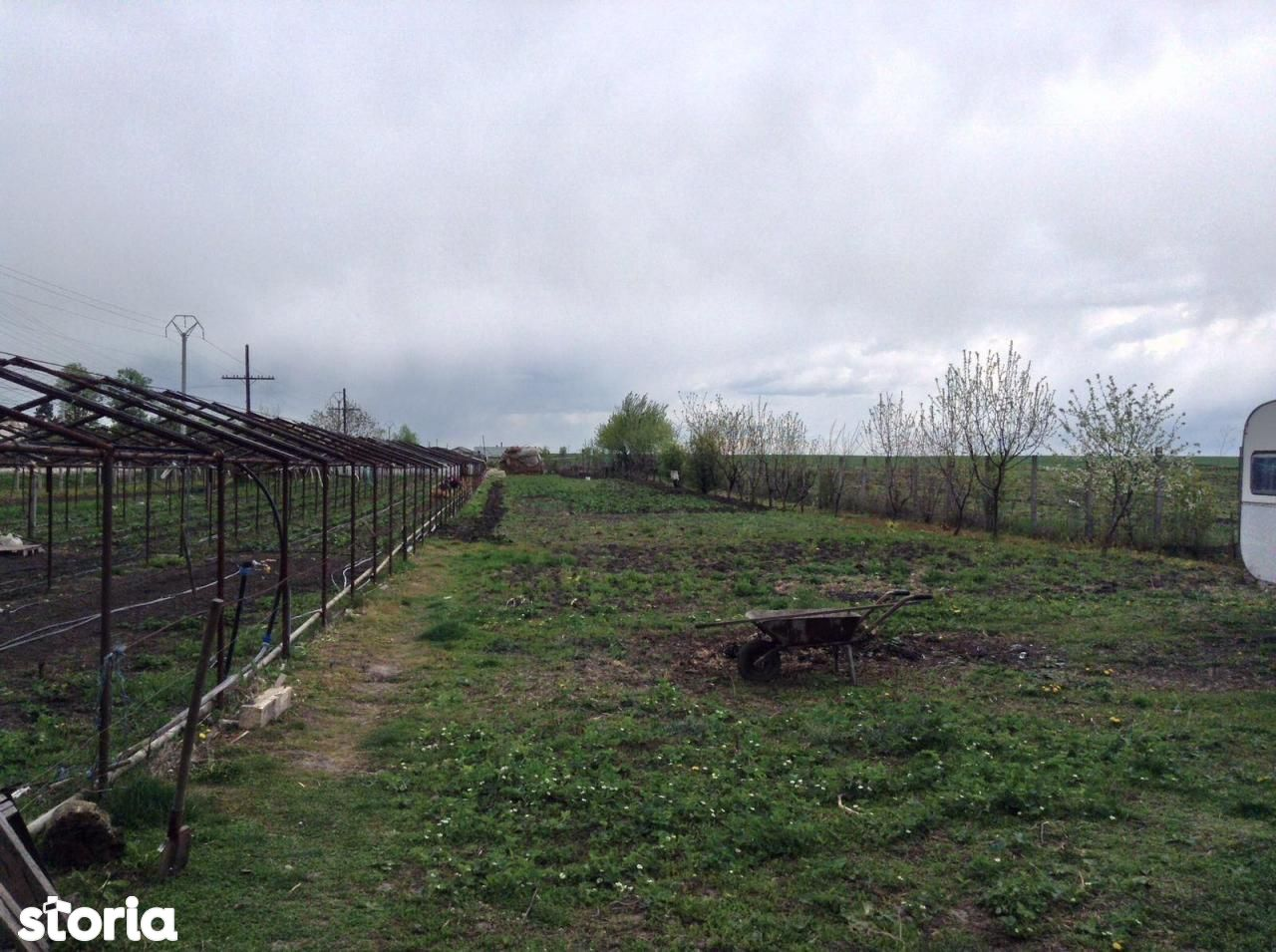 Teren de Vanzare, Giurgiu (judet), Gorneni - Foto 19