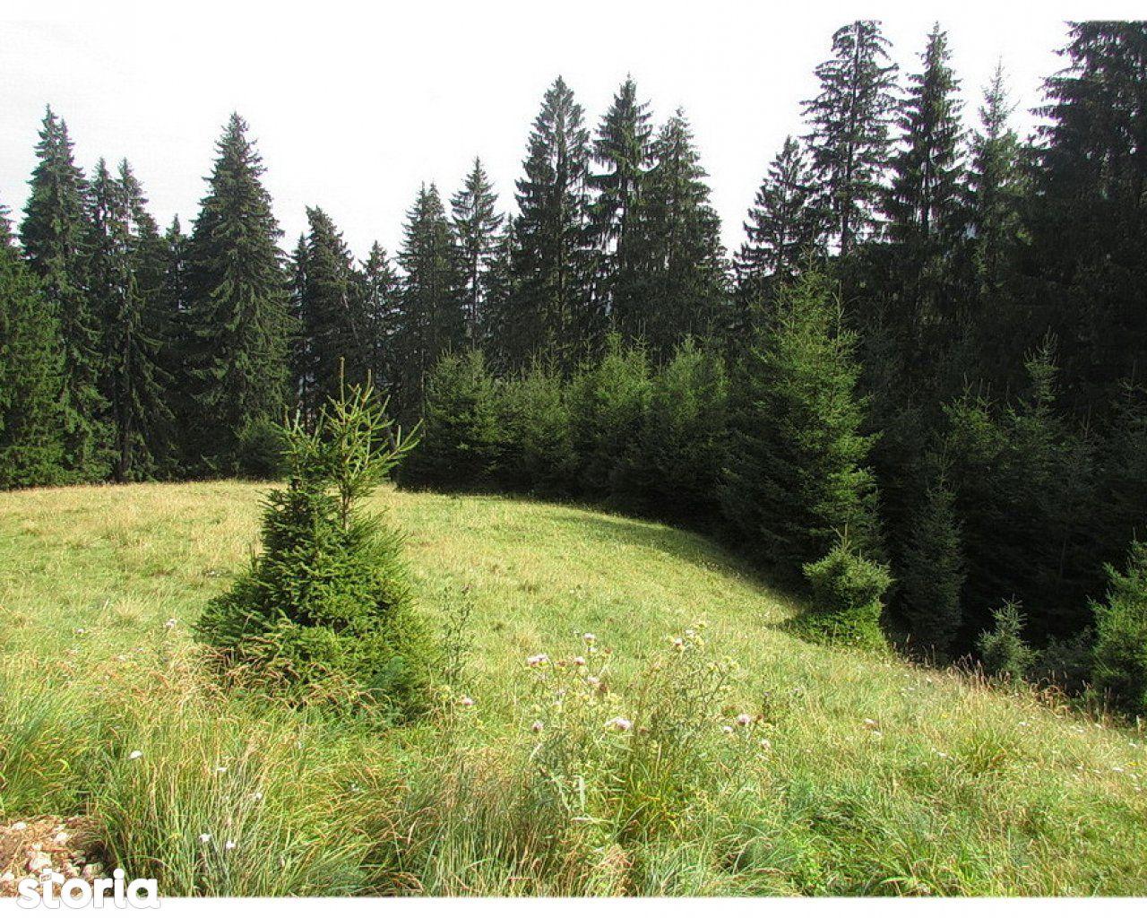 Teren de Vanzare, Brașov (judet), Strada 7 Izvoare - Foto 9