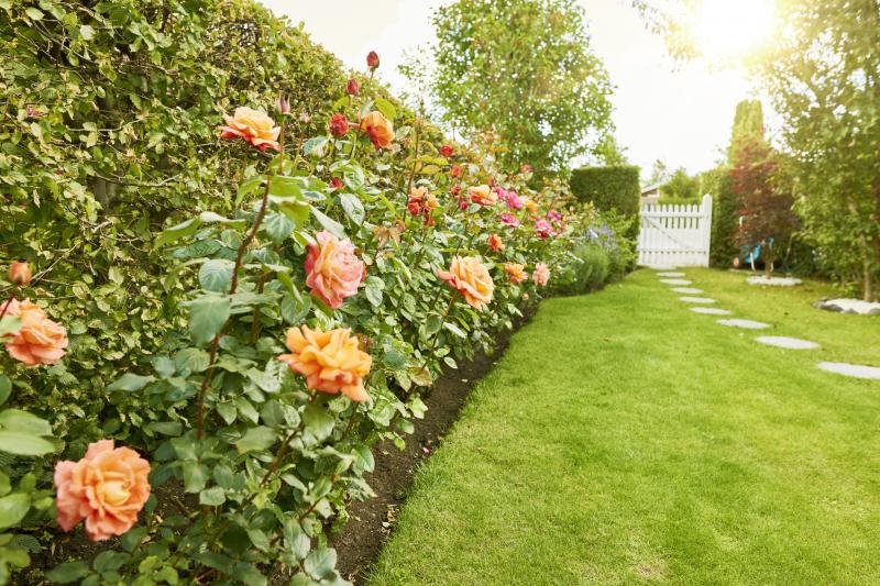 Ogród przed domem