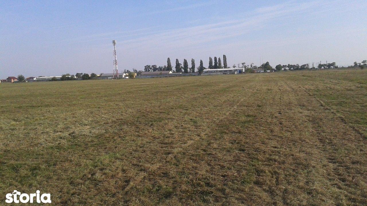 Teren de Vanzare, Timiș (judet), Strada Școlii - Foto 4
