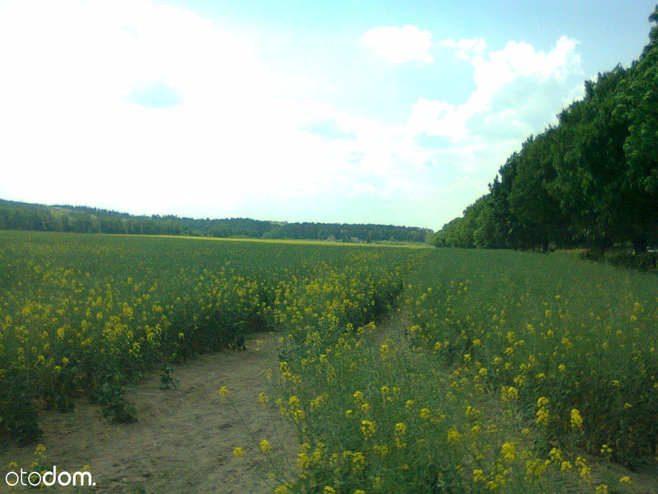 Działka na sprzedaż, Torzym, sulęciński, lubuskie - Foto 6
