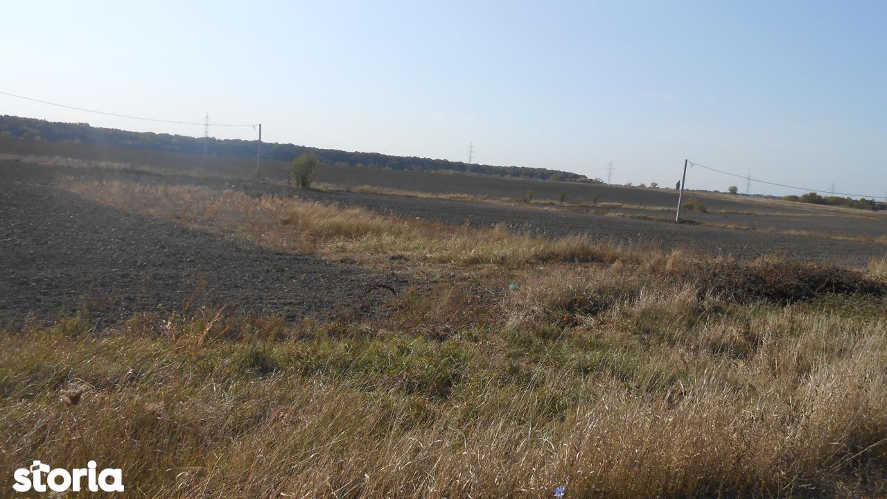 Teren de Vanzare, Timiș (judet), Strada Berzei - Foto 9